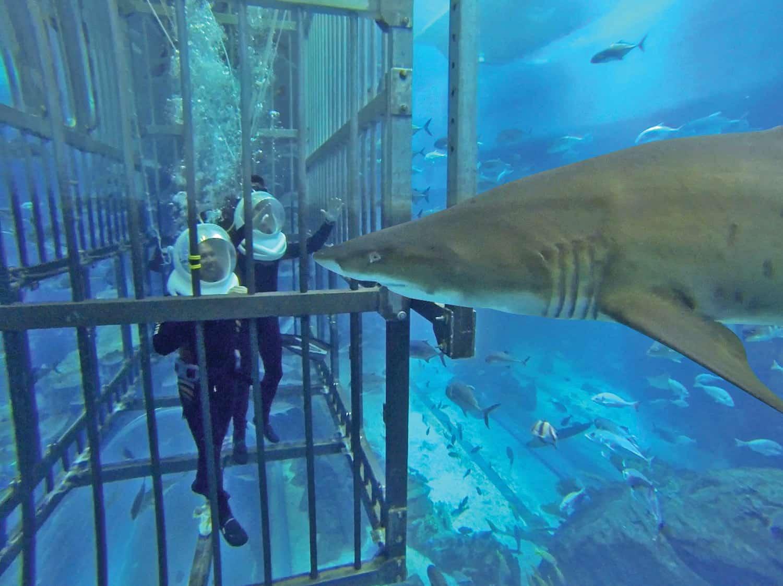 دبي أكواريوم وحديقة الاسماك تحت الماء