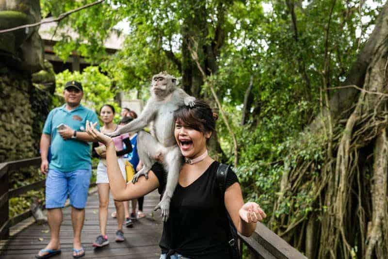 غابة أوبود للقردة – جزيرة بالي