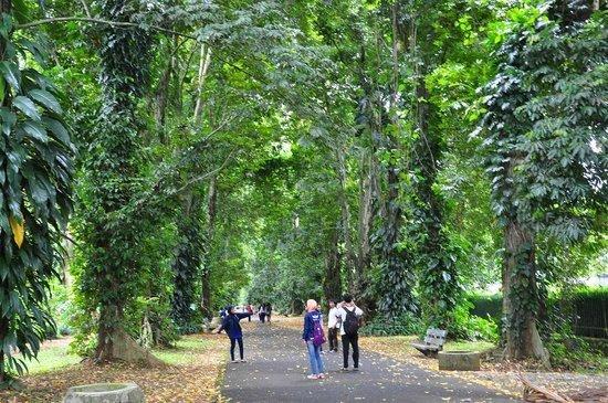حدائق بوجور النباتية – اندونيسيا