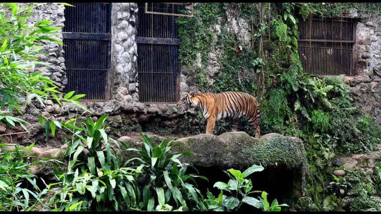 حديقة حيوان راغونان – جاكرتا
