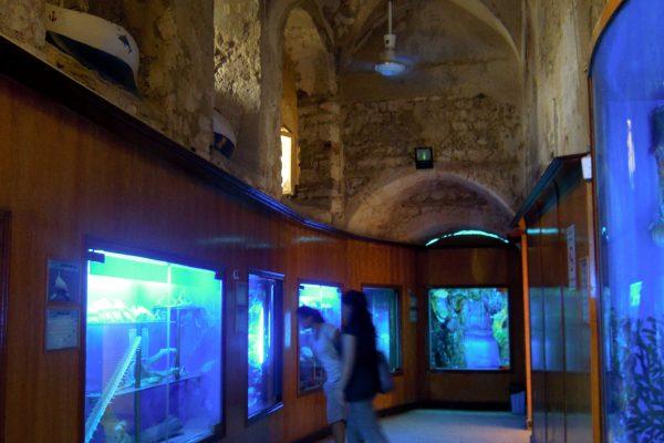 متحف الأحياء المائية