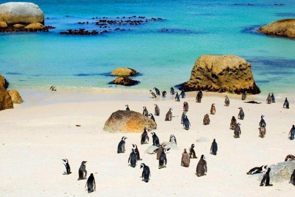 بولدرز مستعمرة البطريق
