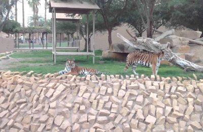 تقرير عن حديقة الحيوان بالرياض