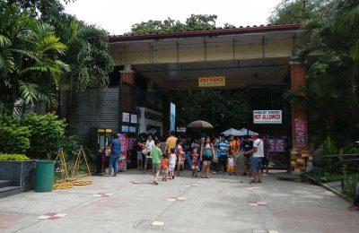 أفضل 4 أنشطة في حديقة حيوان مانيلا الفلبين