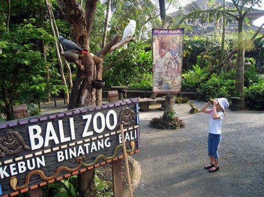 زيارة حديقة الحيوان – جزيرة بالي