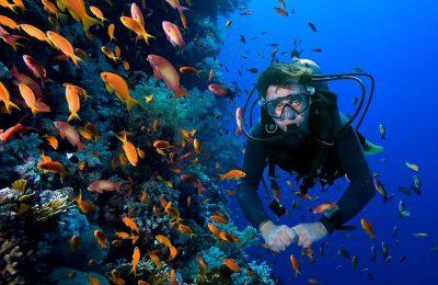 تجربة الغوص في مياه أبوظبي