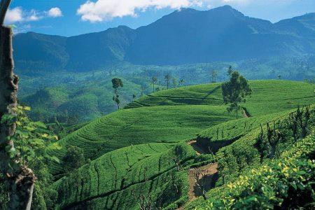 اجمل 5 مناطق سياحية في سريلانكا
