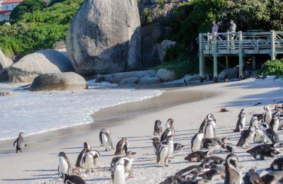 أفضل 5 أنشطة في شاطئ بولدرز كيب تاون جنوب أفريقيا
