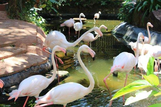 زيارة حديقة الحياة البرية – لنكاوي