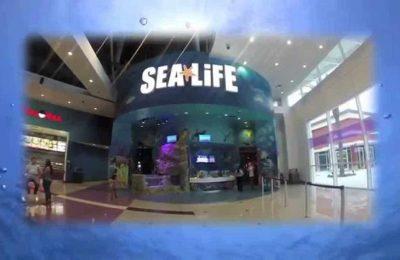 افضل 4 انشطة في اكواريوم الحياة البحرية اورلاندو