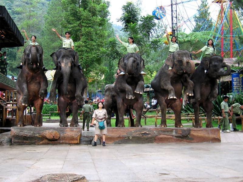 افضل 5 انشطة في حديقة الفيلة في لومبوك