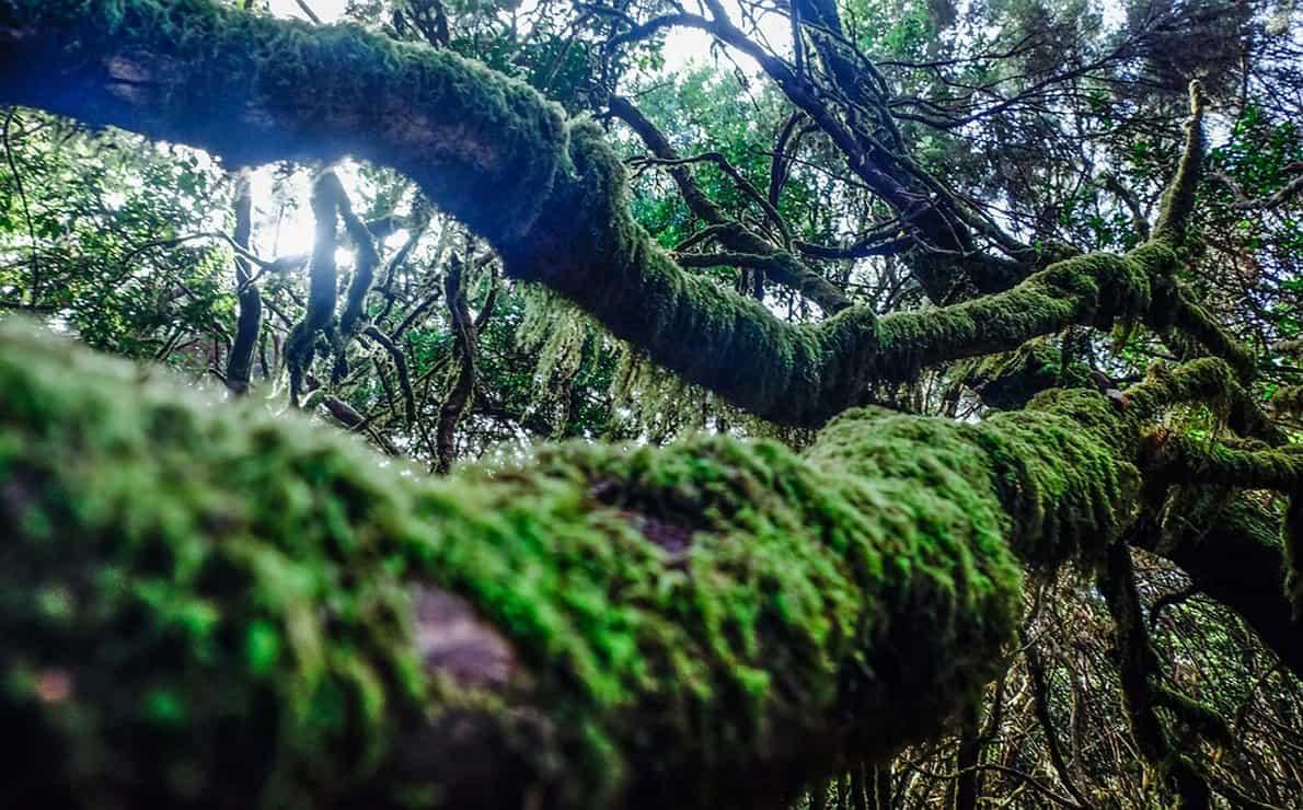 غابات لوريا سيلفا لا غوميرا