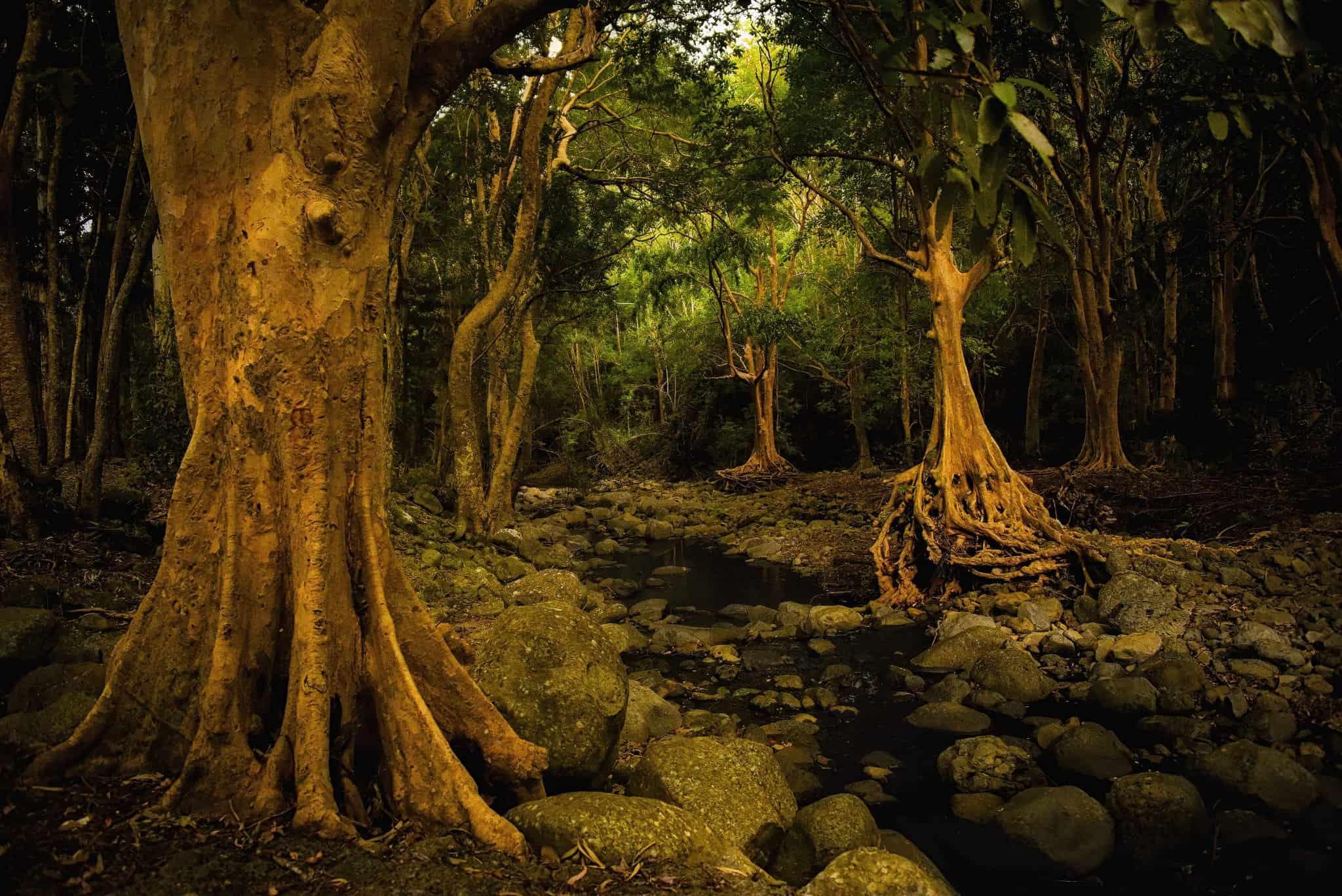 منتزه بلاك ريفر جورجيز الوطني