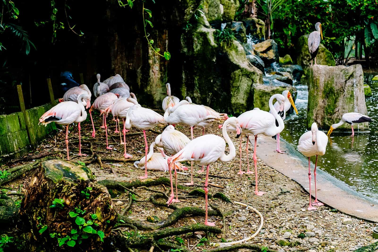 زيارة حديقة طيور كوالالمبور