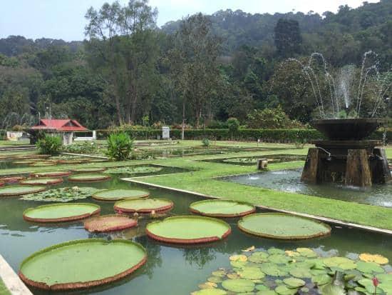 زيارة حدائق بينانج النباتية – بينانج