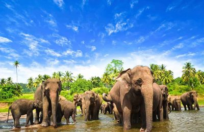 افضل 5 انشطة في ميتم الفيلة في كاندي سريلانكا