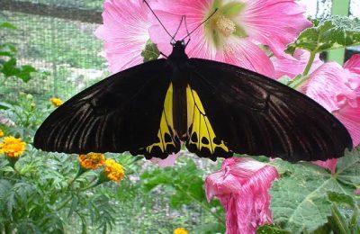 افضل 4 انشطة في حديقة الفراشات كاميرون هايلاند ماليزيا