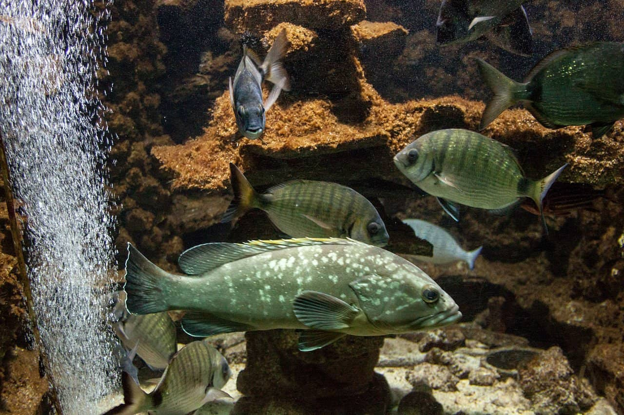 حوض السمك اكواريوم رودس