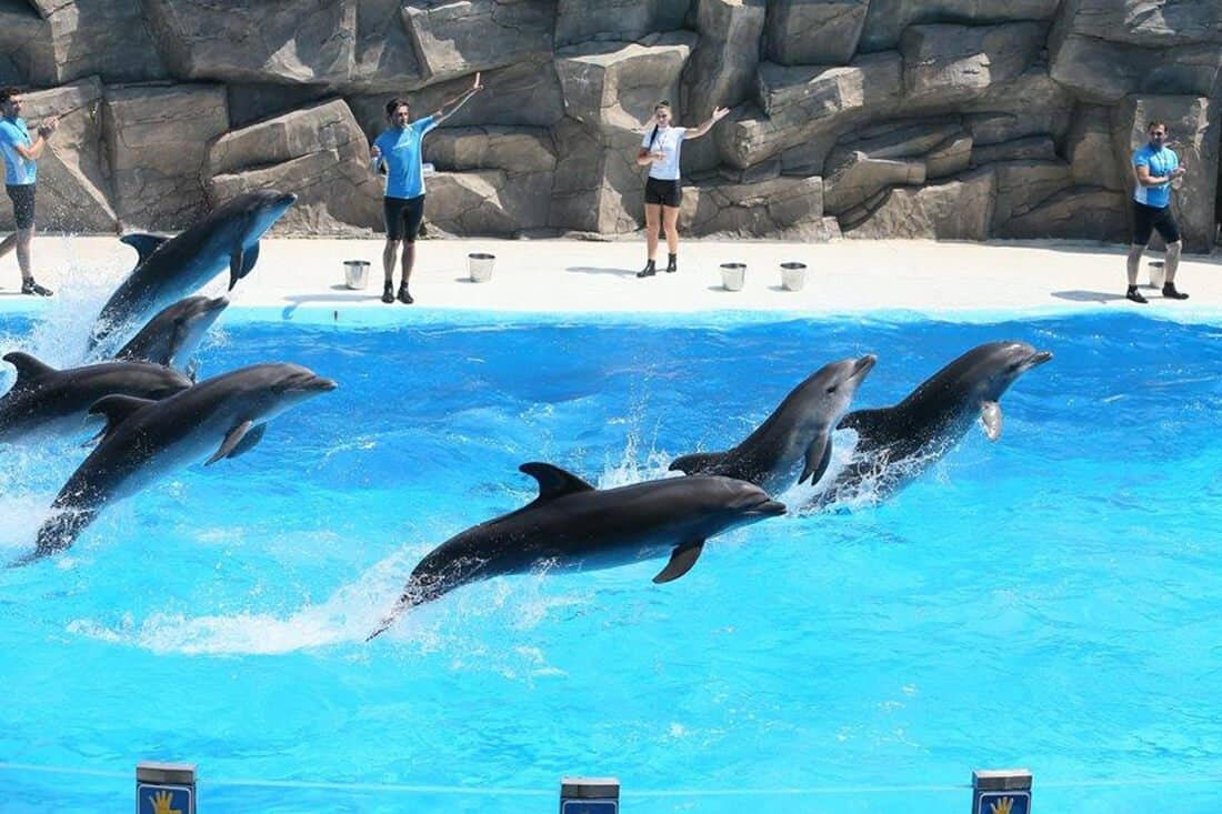 Dolphinarium Batumi
