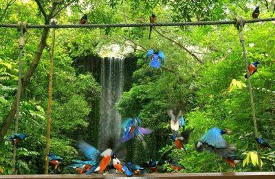افضل 9 انشطة في منتزه يورونغ للطيور سنغافورة