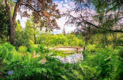 افضل 3 انشطة في الحديقة النباتية القديمة زيورخ سويسرا