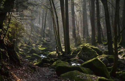 افضل 7 انشطة عند زيارتك الغابة السوداء في المانيا