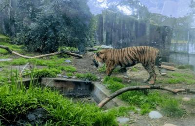 افضل 4 انشطة في حديقة حيوانات سان فرانسيسكو امريكا