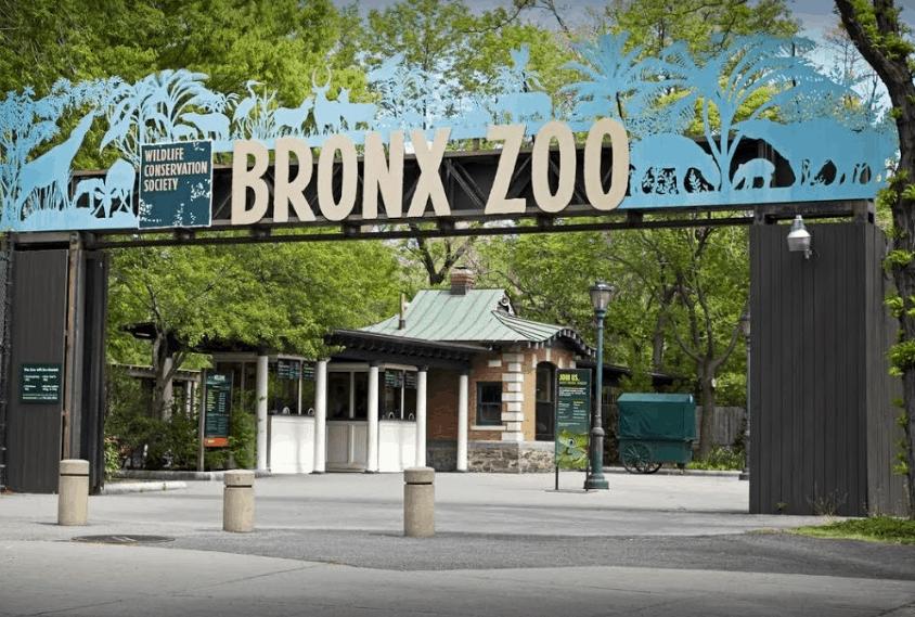 افضل 4 انشطة في حديقة حيوانات برونكس نيويورك امريكا