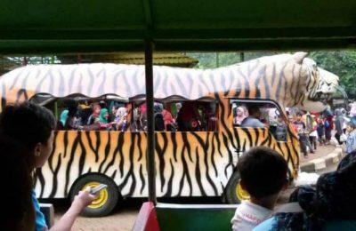 اهم 5 انشطة في حديقة حيوان راغونان جاكرتا
