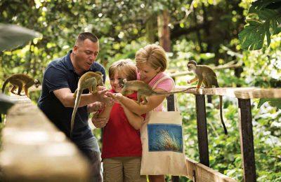 افضل 5 انشطة في غابة القرود في ميامي امريكا