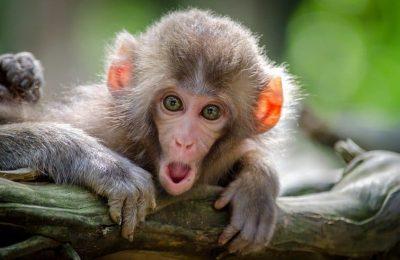 افضل 5 انشطة في حديقة القرود بينانج ماليزيا