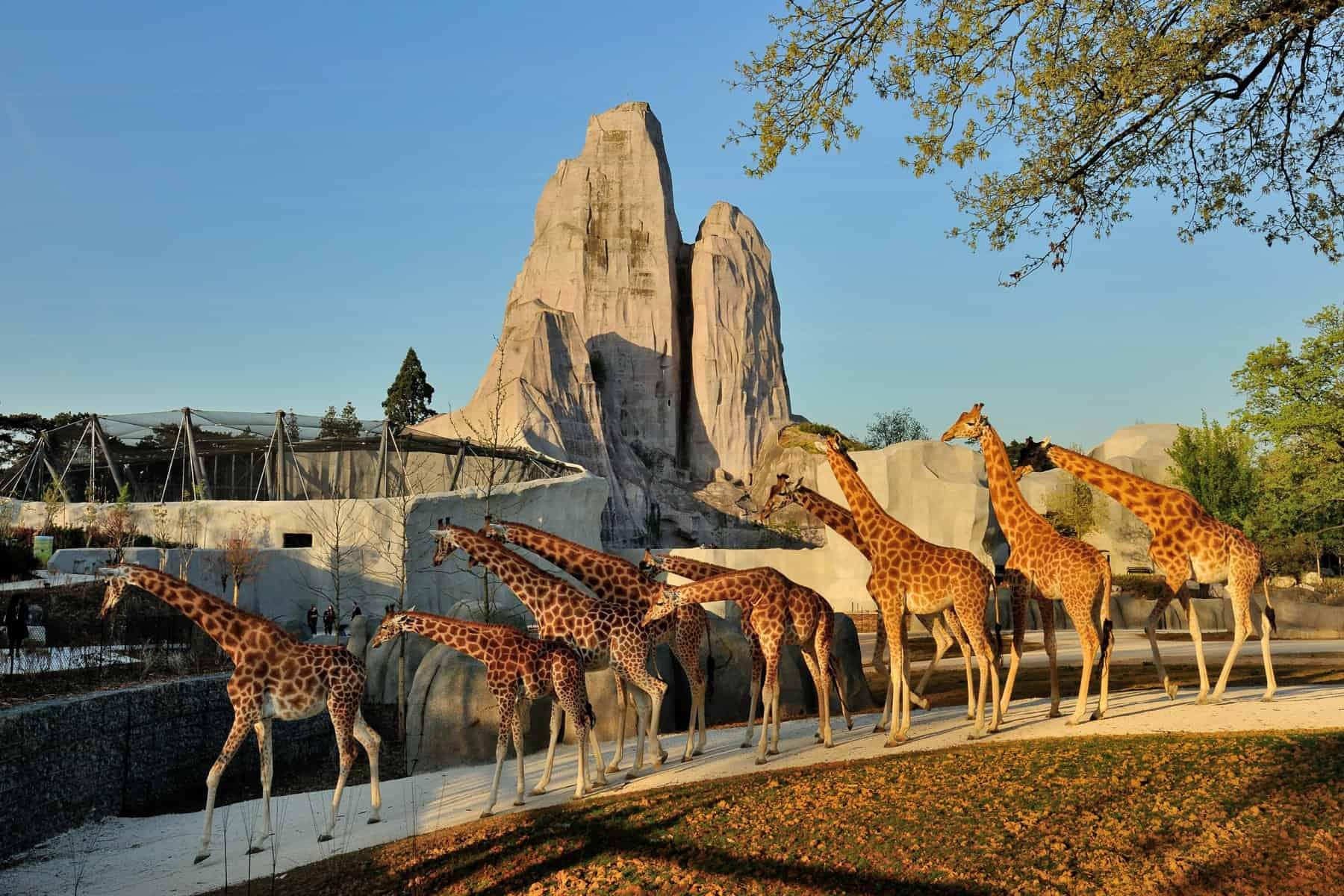 حديقة حيوان Parc Zoologique de paris