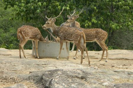 افضل 7 انشطة في حديقة بانيرغاتا في بنجلور الهند