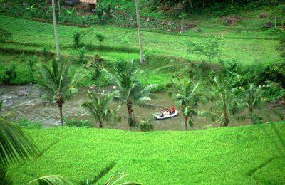 افضل 3 انشطة في حديقة طيور بالي اندونيسيا