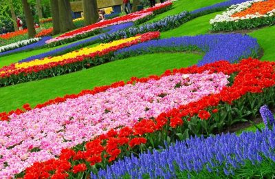 افضل 3 انشطة في حديقة الزهور في بونشاك اندونيسيا