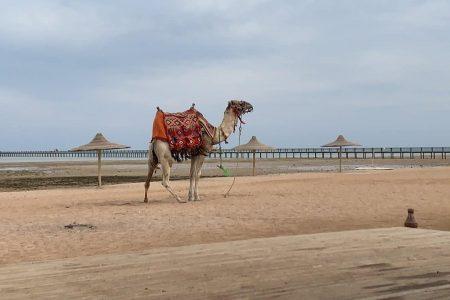 افضل 4 اماكن سياحية في خليج مكادي ننصح بزيارتها