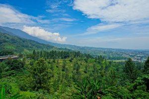 افضل 4 من فنادق بونشاك اندونيسيا الموصى بها لعام 2020