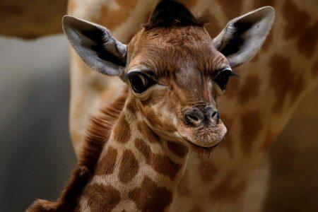 افضل 6 انشطة في حديقة الحيوانات باريس