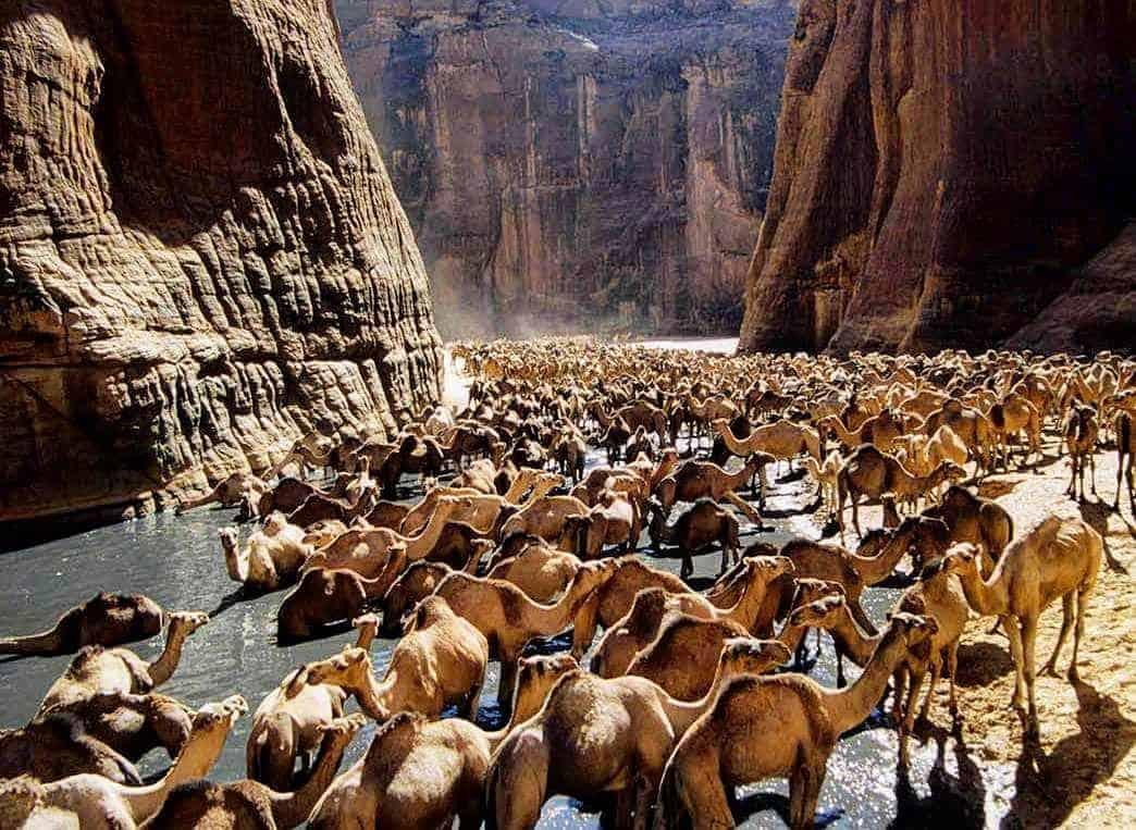 محمية وادي الجمال مرسى علم