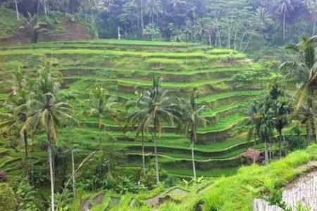 افضل 6 انشطة في مزارع الشاي تشيبودي باندونق اندونيسيا