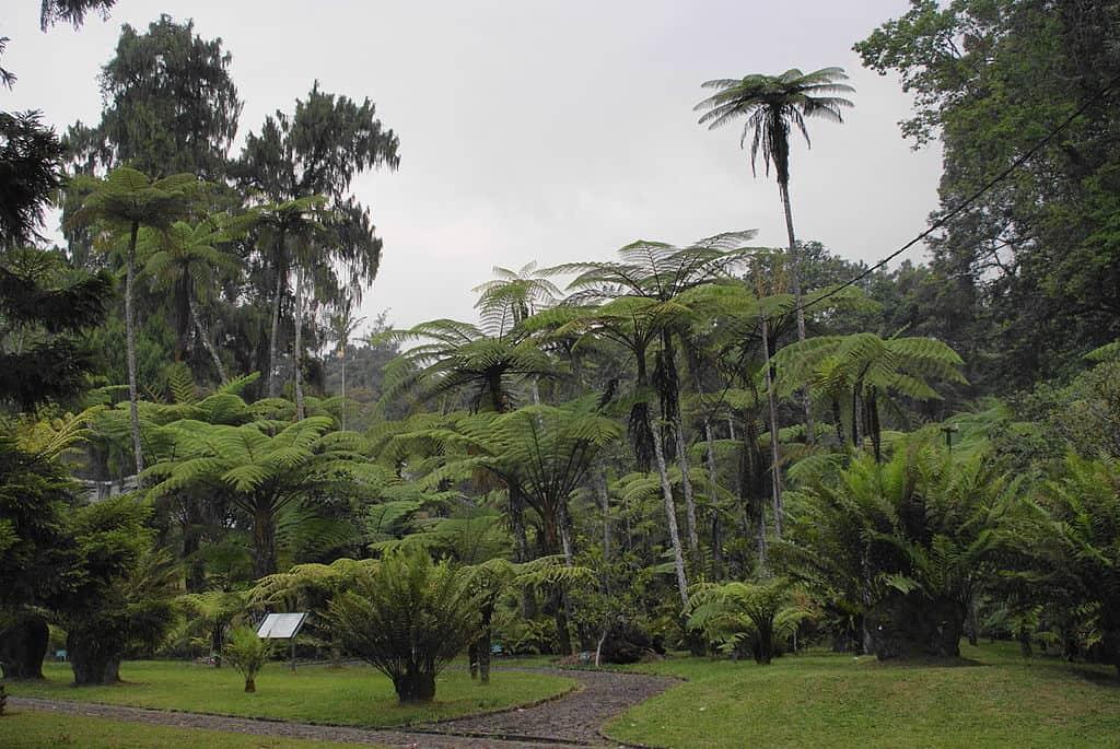 منتزه تشيبوداس الوطني