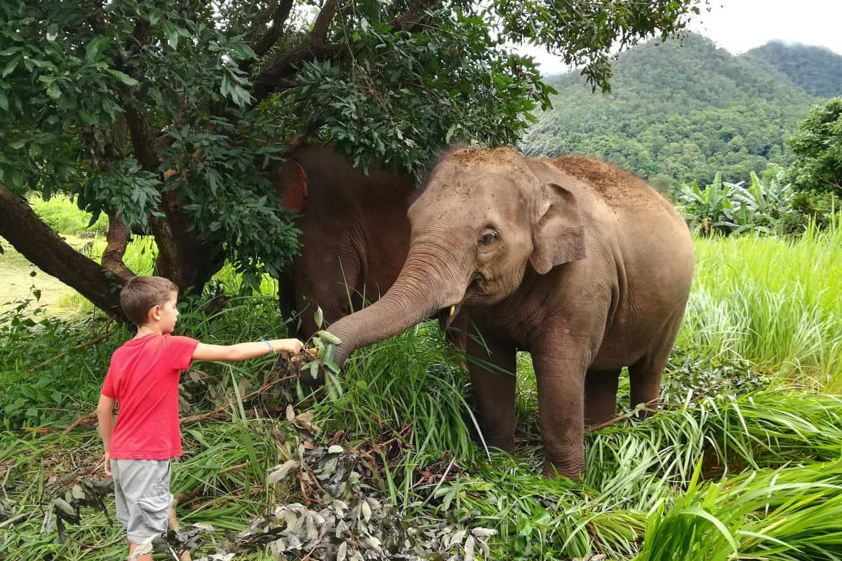 إطعام أحد الفيلة في الحديقة