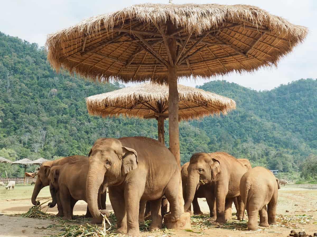 مشاهدة حياة الفيلة داخل الحديقة