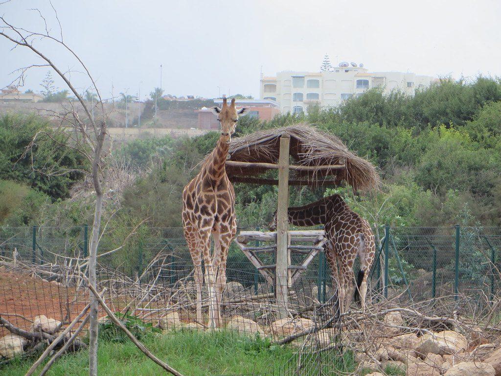 حديقة الحيوانات بالدار البيضاء