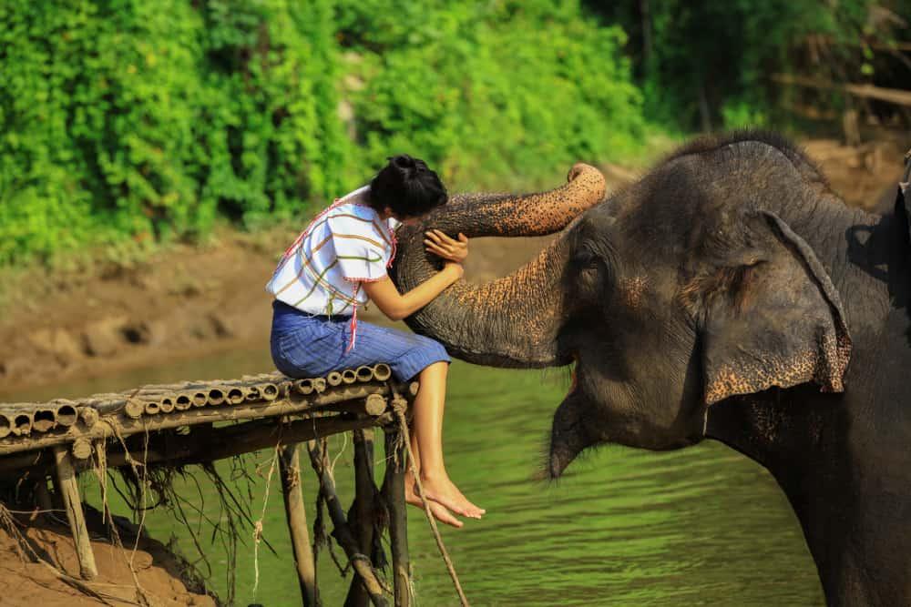 افضل 3 انشطة عند زيارة حديقة الفيلة في شنغماي تايلاند