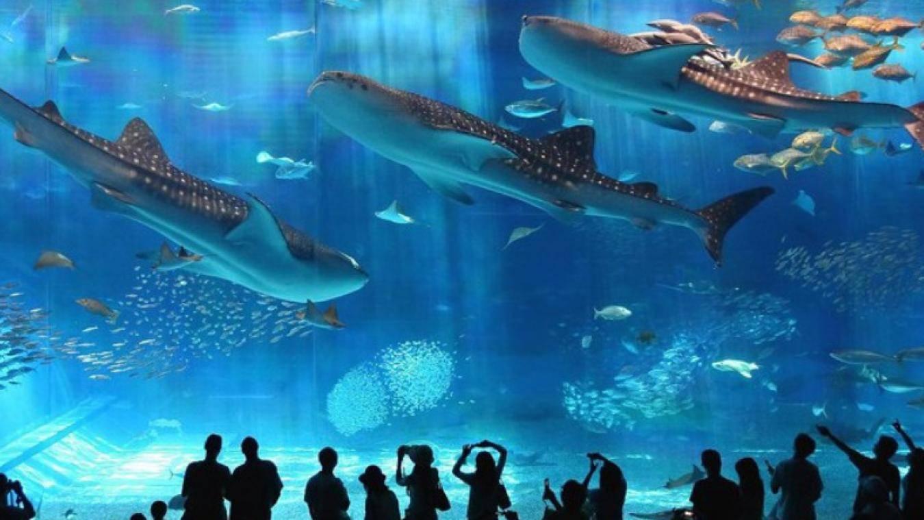 زيارة معرض وادي الحيتان