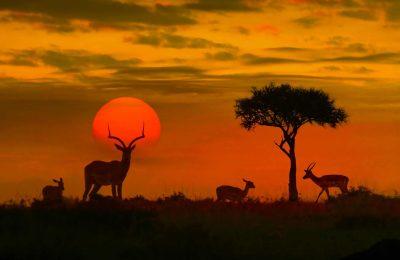 تقرير مصور عن متنزه كروغر الوطني افريقيا