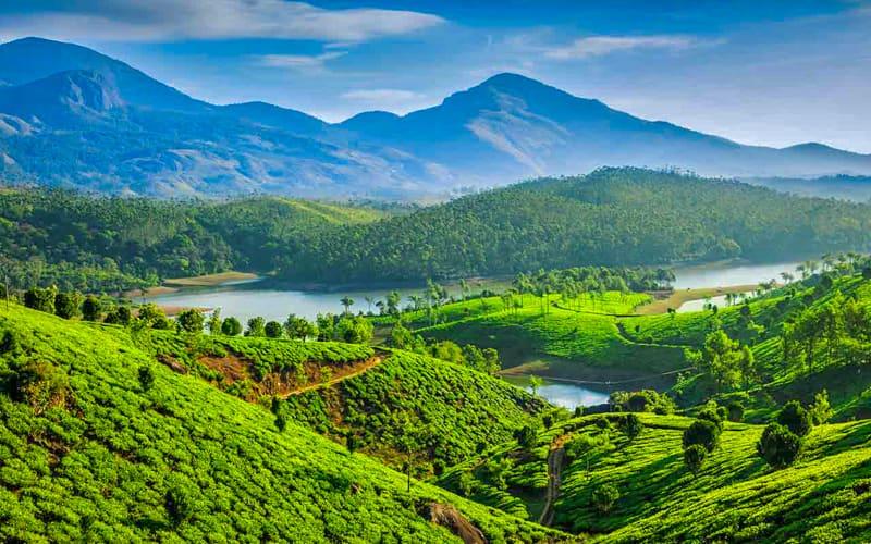 صورة الحقول الخضراء في كيرلا