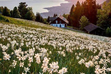 اشهر 10 معالم في مونترو سويسرا