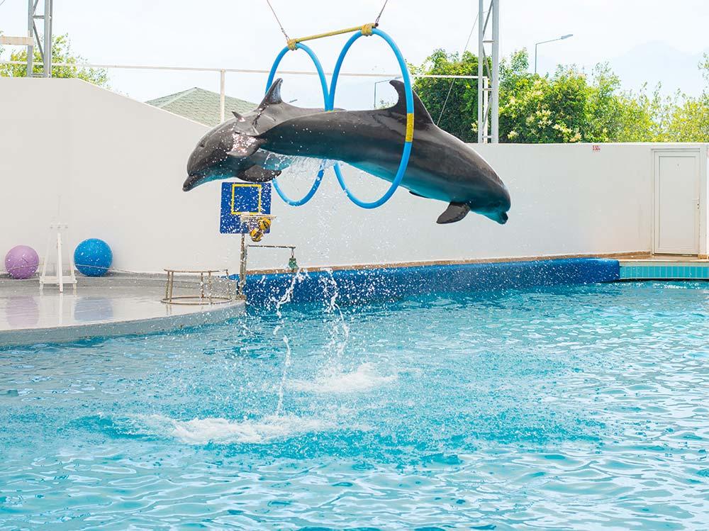 عروض الدلافين اكوا لاند انطاليا المائية